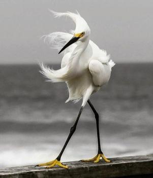 oiseau fier